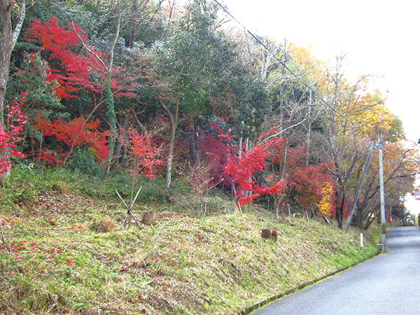 57-四国往来と紅葉並木